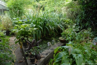 Old Goldfish Pond
