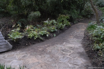 new paving and epimedium bed