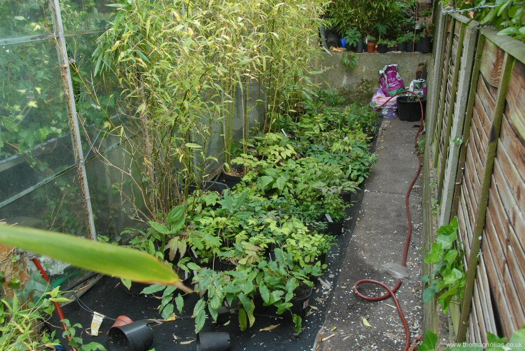 Epimedium Pot Area