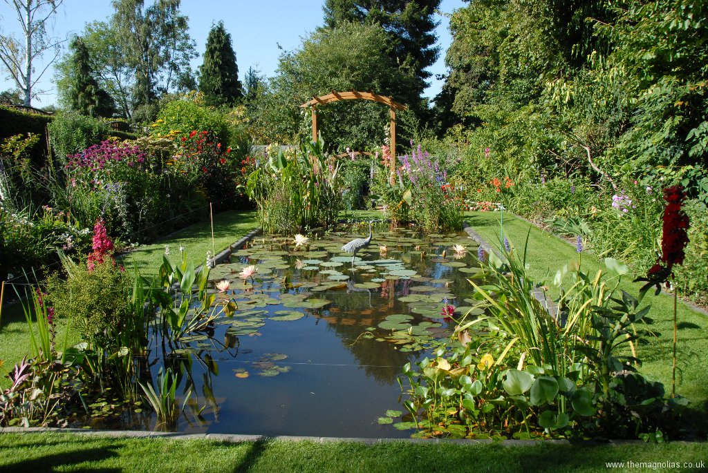 Looking North over the waterlily pond
