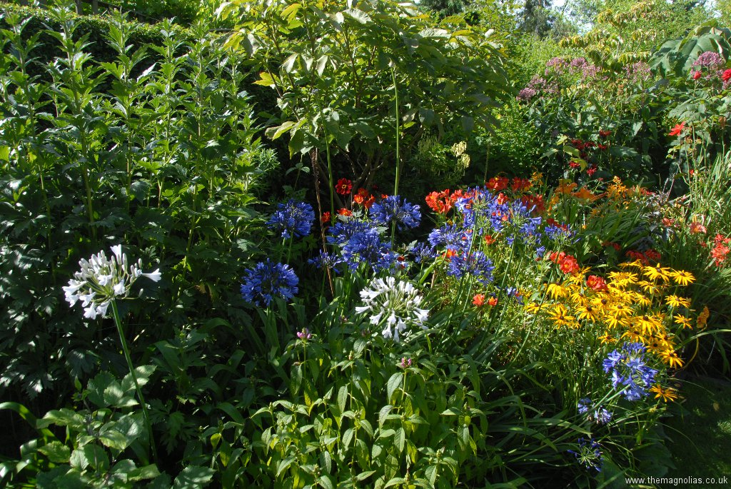 Summer Border August 2012