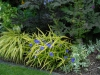 Hakenochloa and Tradescantia 'Blue and Gold'