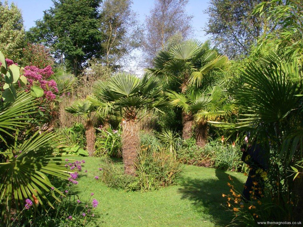 Paul & Valerie Guppy's Garden