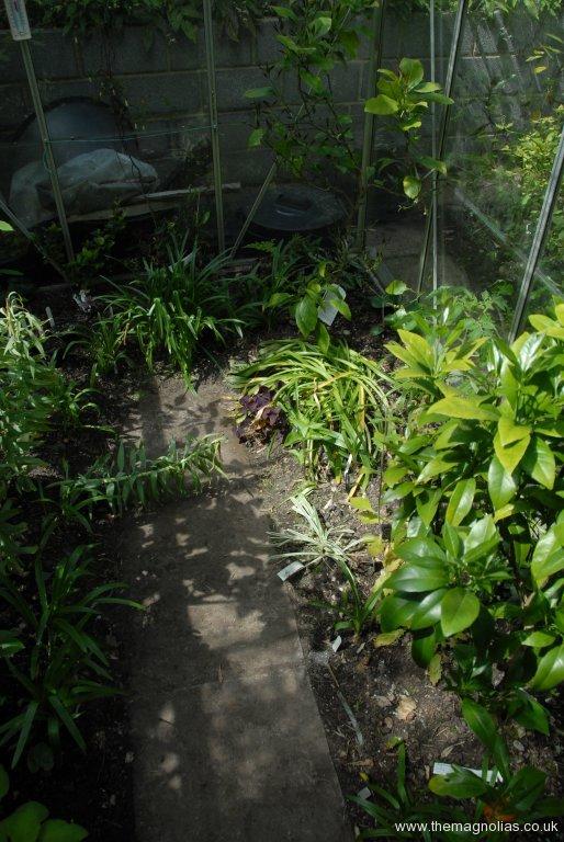 Orange and Lemon in new greenhouse
