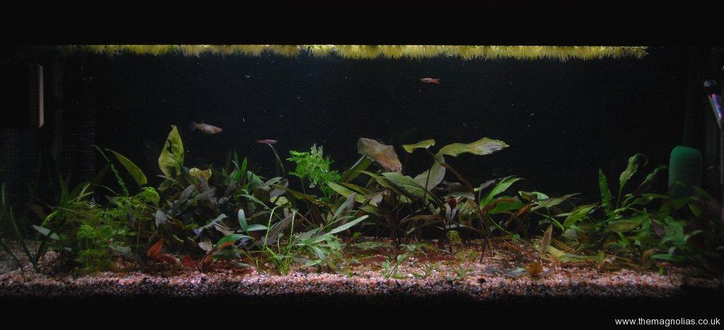 Bedroom Tank
