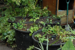 Five Ex-water Plant Tubs