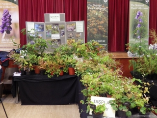 Norfolk Plant Fair Epimedium Display