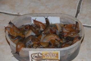 Even More Slugs
