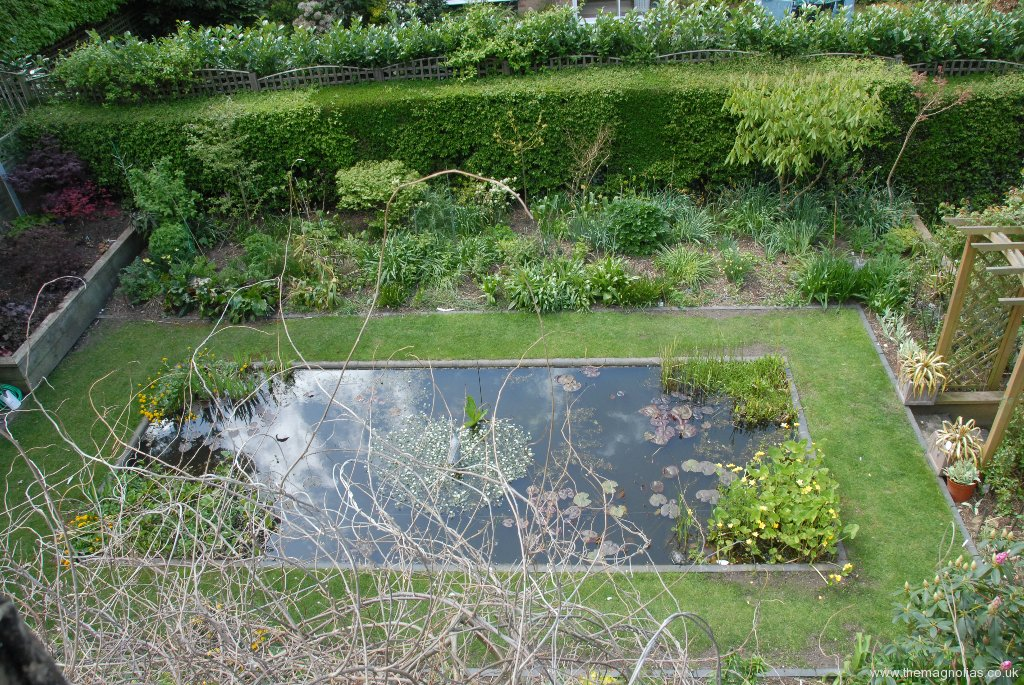 Aerial View of Water Lily Pond with Celastrus Shoots in foreground.