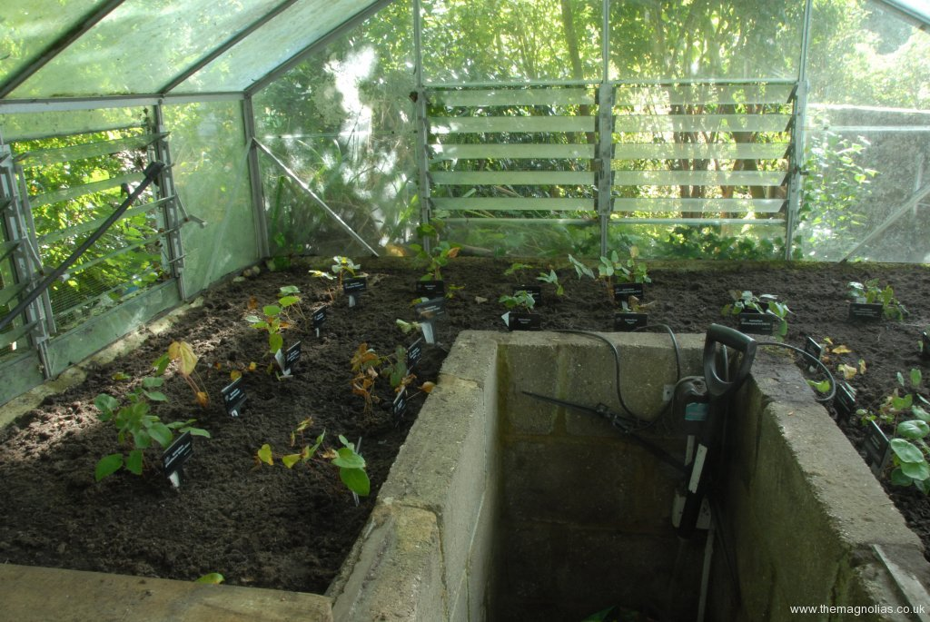 Epimedium Nursery Greenhouse