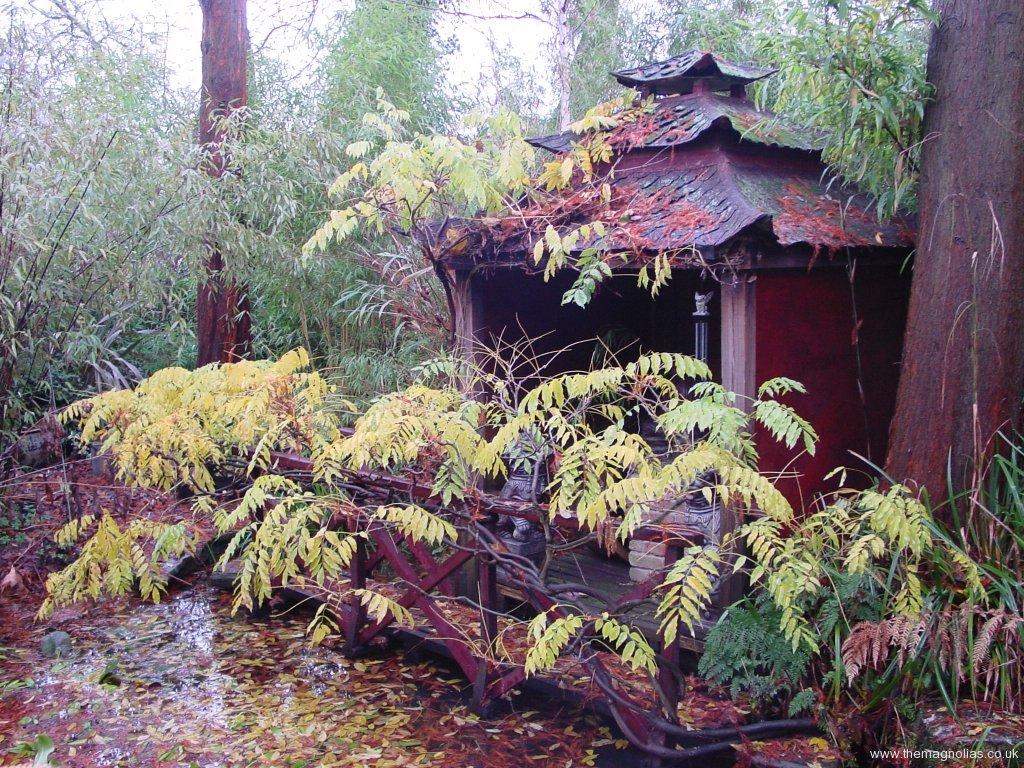ist Pagoda Nov. 2005