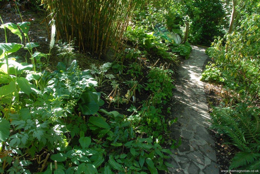 New Epimedium Planting