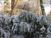 Mahonia lomariifolia resisting the cold